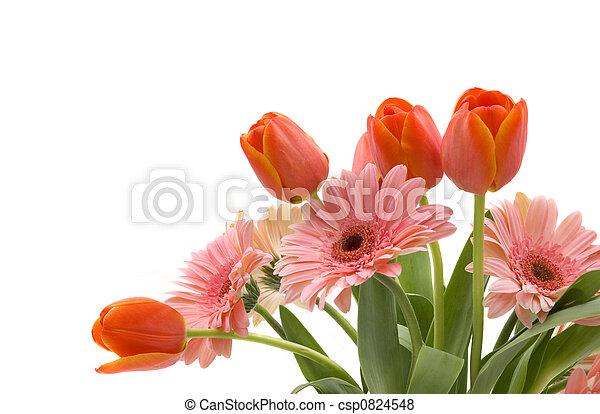 春の花 - csp0824548