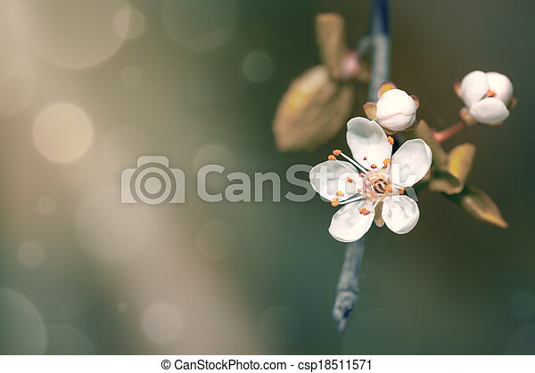 春の花 - csp18511571