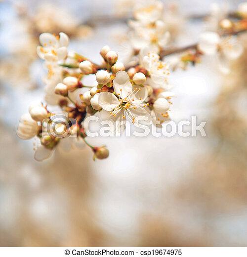 春の花 - csp19674975