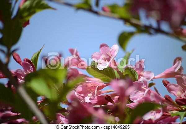 春の花, 背景 - csp14049265
