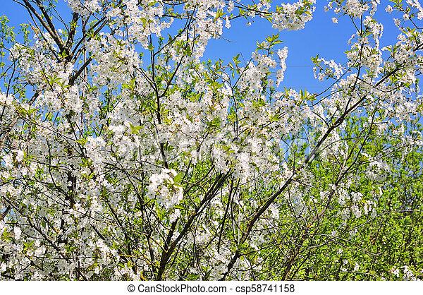春の花, 背景 - csp58741158