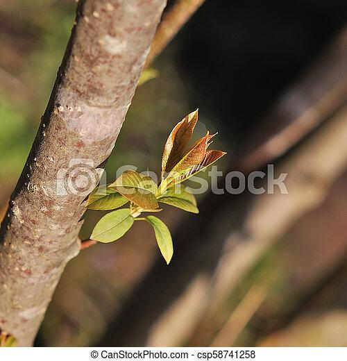 春の花, 背景 - csp58741258