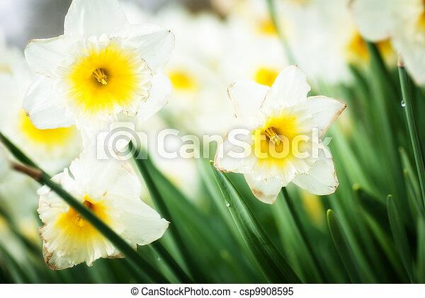 春の花, 背景 - csp9908595