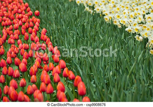 春の花, 背景 - csp9908676