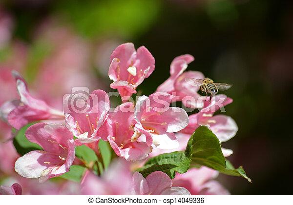春の花, 背景 - csp14049336