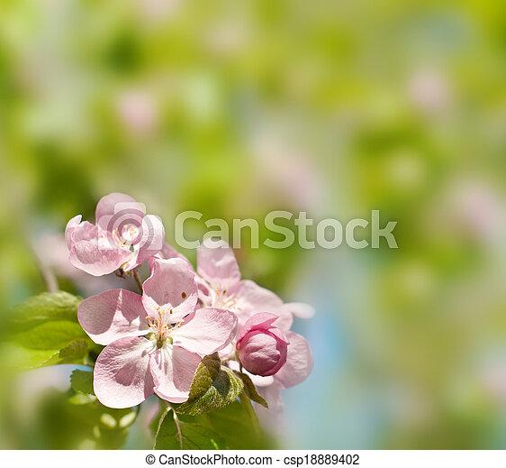 春の花, 背景 - csp18889402