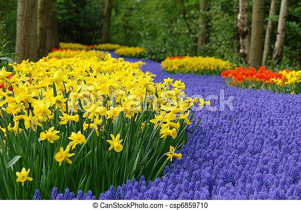 春の花, keukenhof, ベッド - csp6859710