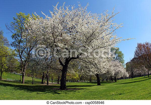 春 - csp0058946