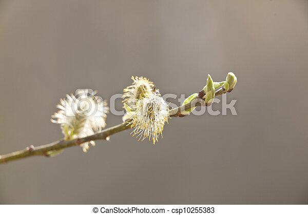 春 - csp10255383