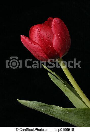春, 新たに - csp0199518