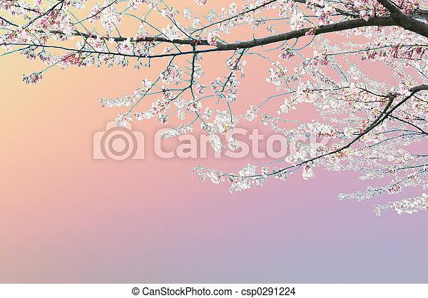 春, 木 - csp0291224