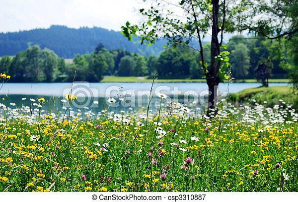 春, 牧草地 - csp3310887