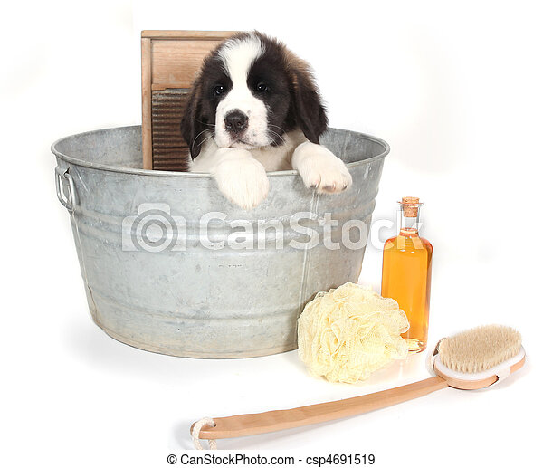 時間, bernard, 聖者, washtub, 浴室, 子犬 - csp4691519