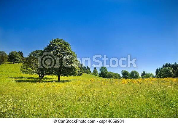 景色, 青, のどかな, 牧草地, 空, 海原, 緑, 田園 - csp14659984