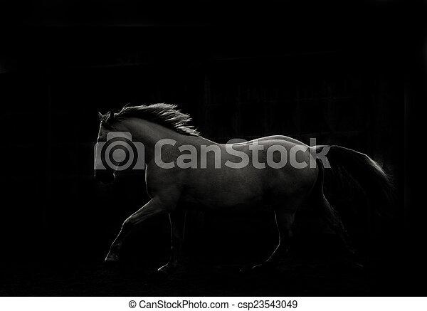 暗い, 白, 操業, 馬 - csp23543049