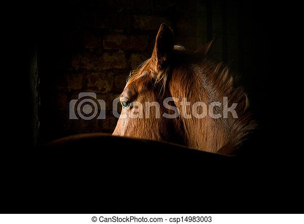 暗い, 馬 - csp14983003