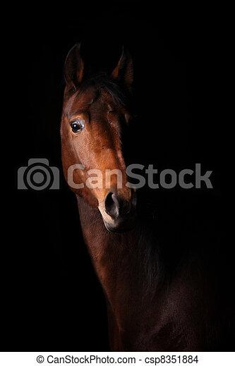 暗い, 馬 - csp8351884