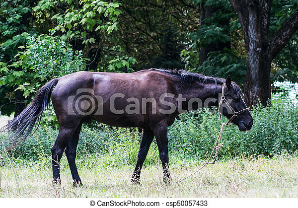 暗い, 馬, 公園, 歩く - csp50057433