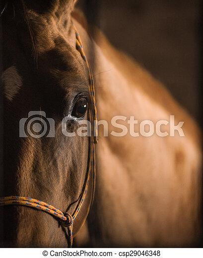 暗い, 馬, 目 - csp29046348