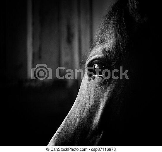 暗い, 馬, 目 - csp37116978