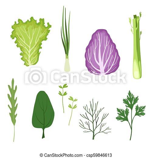有機体である, サラダ緑, セット, 葉, 料理, 健康, ハーブ, ベクトル, 背景, イラスト, 菜食主義者, 白, 葉が多い野菜 - csp59846613