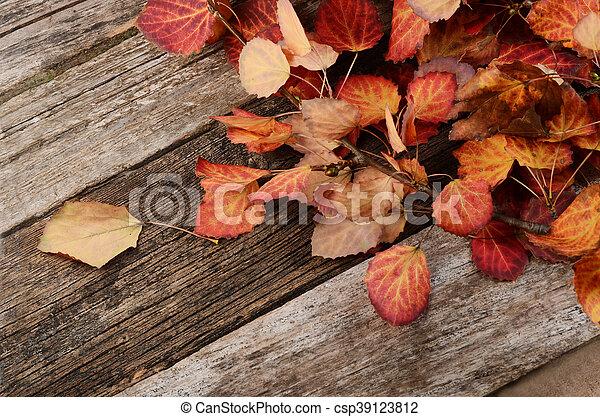 木製である, 紅葉, 背景 - csp39123812
