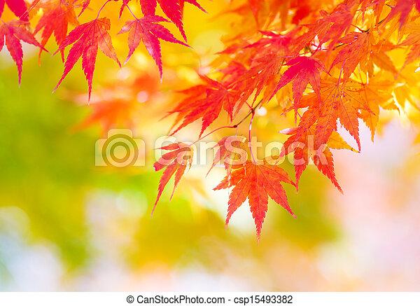 木, かえで - csp15493382
