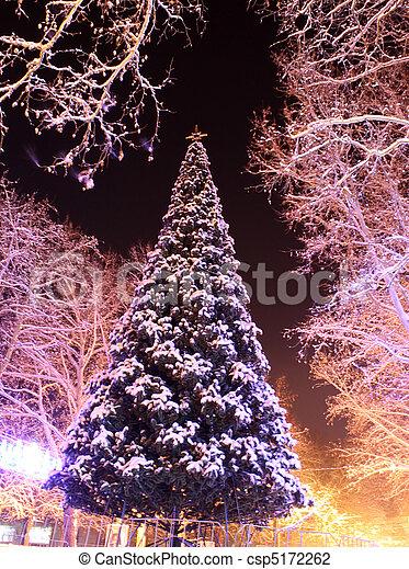 木, クリスマス - csp5172262