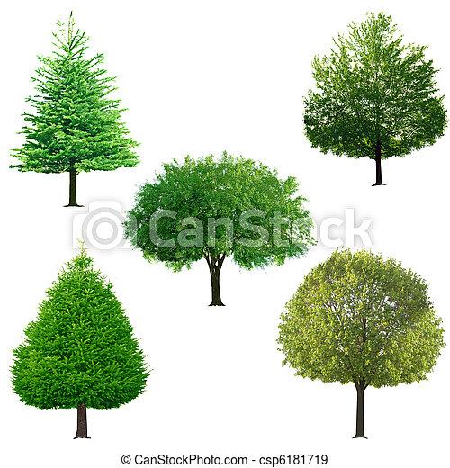 木, コレクション - csp6181719