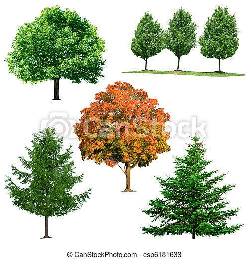 木, コレクション - csp6181633