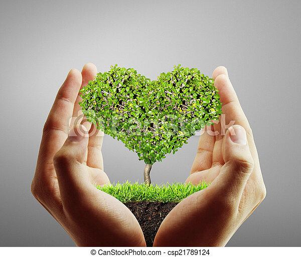 木, 保有物 - csp21789124