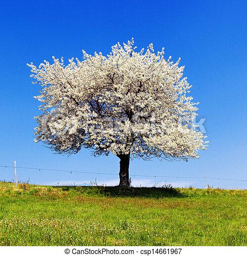 木, 単一, 開くこと, spring. - csp14661967