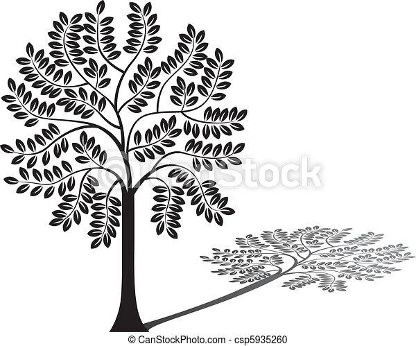 木, 影, シルエット - csp5935260