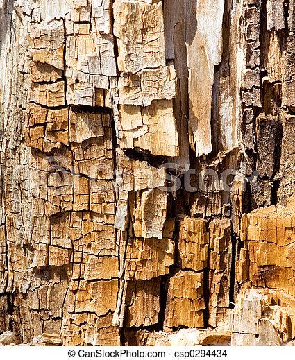 木, 手ざわり - csp0294434