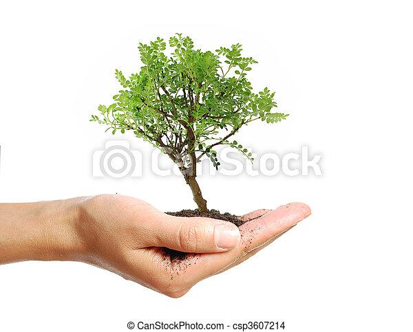 木, 手 - csp3607214