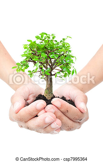 木, 手 - csp7995364