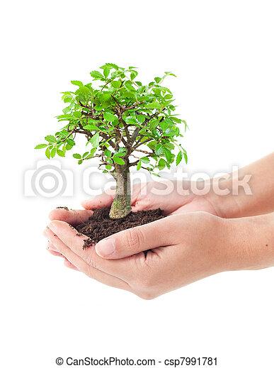木, 手 - csp7991781