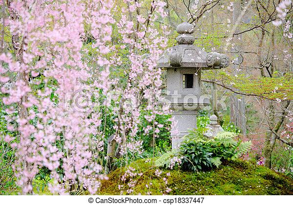 木, 日本の庭, sakura - csp18337447