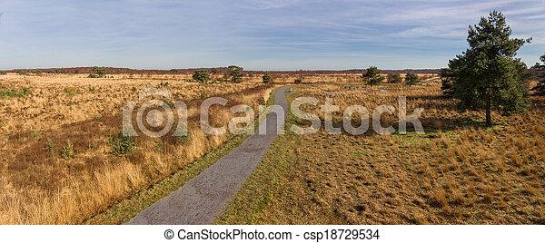 木, 歩くこと, heathland, によって, 道 - csp18729534