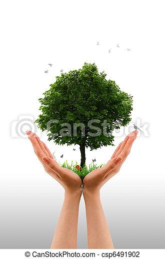 木, -, 生きている, 手 - csp6491902