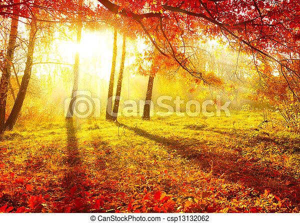 木, 秋, 秋, 秋, leaves., park. - csp13132062