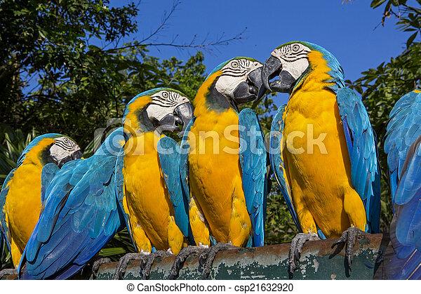 木, macaw, カラフルである, グループ - csp21632920