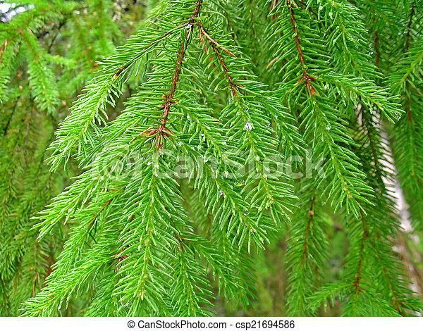 針葉樹 種類