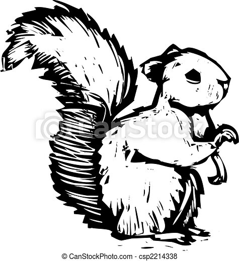 松鼠 - csp2214338