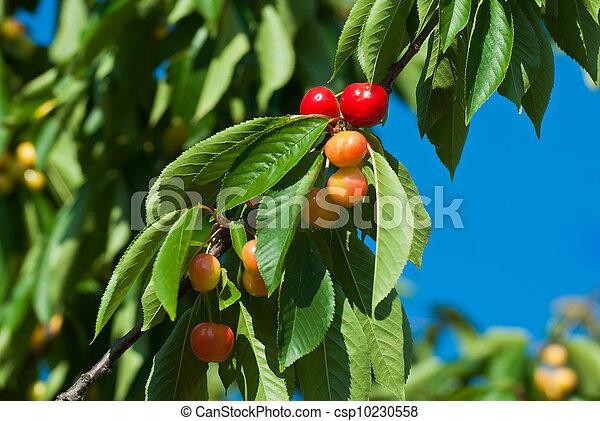 桜の木 - csp10230558
