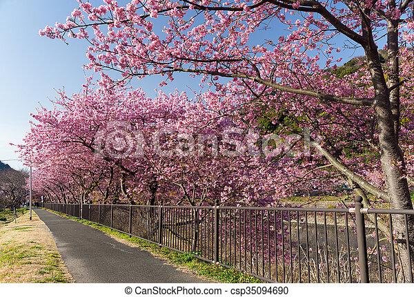 桜の木 - csp35094690