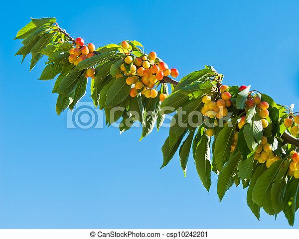 桜の木 - csp10242201