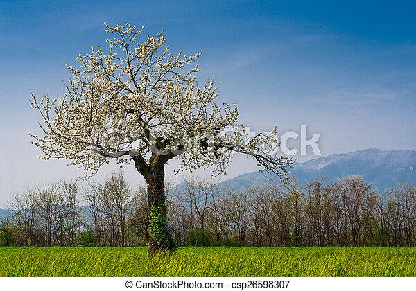 桜の木 - csp26598307