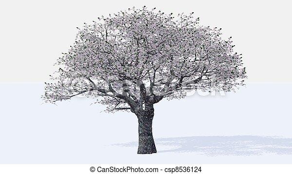 桜の木 - csp8536124