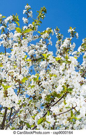 桜の木 - csp9000164